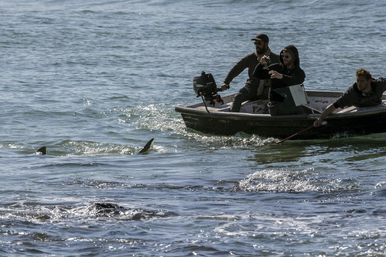 A picture taken on January 23, 2017, shows Israelis taking photos of sharks from a small boat in the Mediterranean sea off the Israeli coastal city of Hadera north of Tel Aviv. (AFP PHOTO / JACK GUEZ)