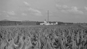 The flax-retting area at Unterschleissheim, as it looked during the Holocaust. (Peter Vahlensieck)