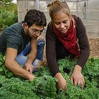 Students work in the field at the Arava Institute. (Courtesy)