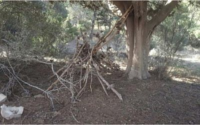 An 'arson preparation,' found in a forest near Megiddo in northern Israel, after the wave of fires in November 2016. A similar device was found to be the remains of a fort built by Israeli children. (Israel Fire and Rescue Services)