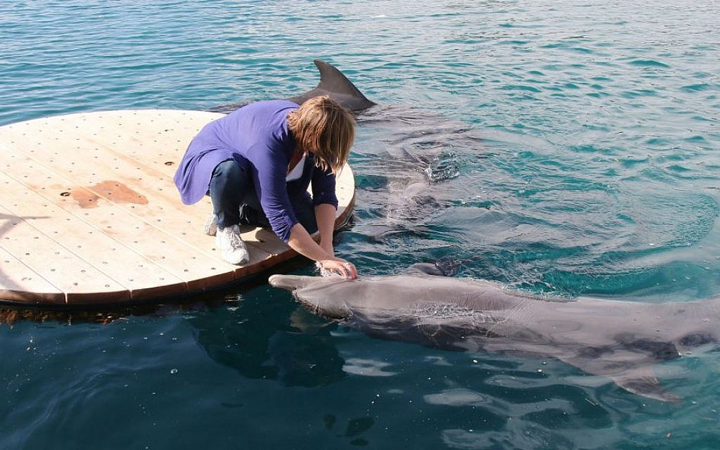 The dolphins at the Reef know each trainer personally, and prefer to interact with specific individuals. (Shmuel Bar-Am)