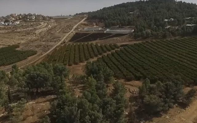 A screenshot from footage of agricultural fields near Havat Ma'on in the West Bank, filmed by a drone operated by a Palestinian NGO. (Screenshot/Regavim)
