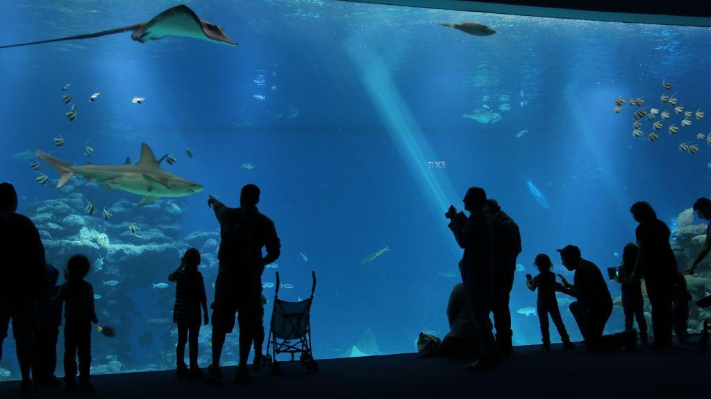 Visitors at Shark World, part of Eilat's Underwater Observatory. (Shmuel Bar-Am)