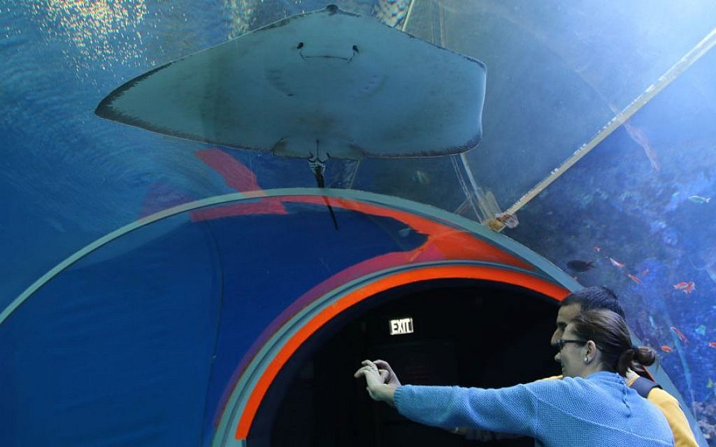 Tourists walk through the 15-meter transparent tunnel through the Underwater Observatory's shark pool. (Shmuel Bar-Am)