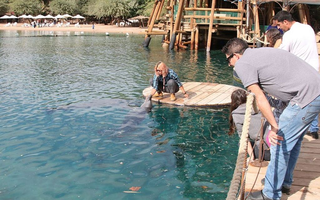 Staff and visitors on the pier of the Dolphin Reef in Eilat. (Shmuel Bar-Am)