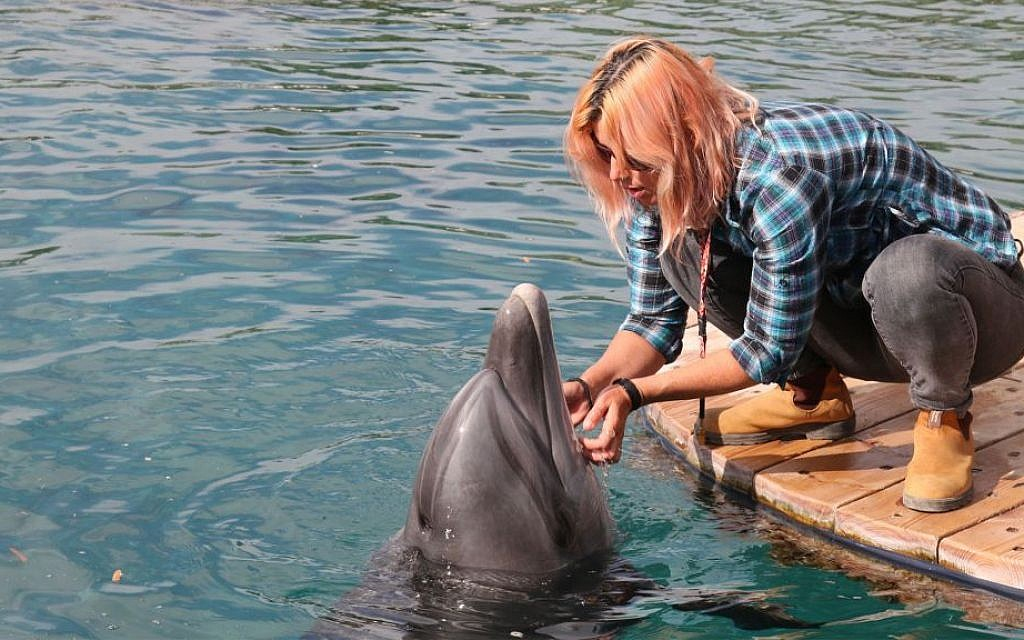 Head trainer Tal Fisher at the Dolphin Reef in Eilat. (Shmuel Bar-Am)