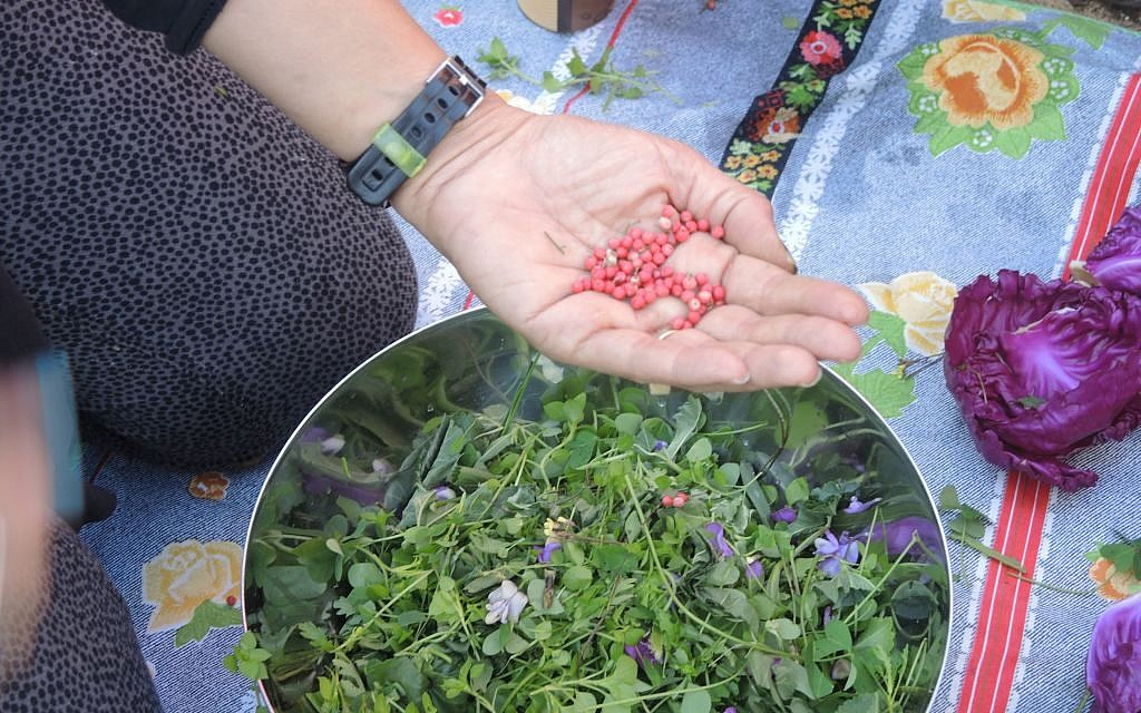 The pink peppercorn tree, native to South America, is found across Israel. In a store, pink peppercorns are considered a specialty item that can sell for NIS 150 per kilo. Heela Harel adds them to a foraged salad on February 2, 2017. (Melanie Lidman/Times of Israel)