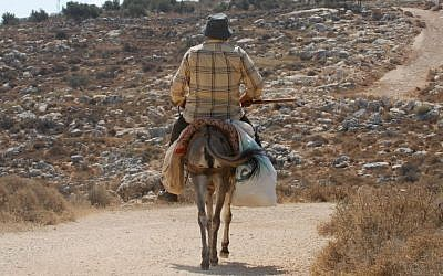 Illustrative photo of a Palestinian man riding a donkey in the West Bank,  July 31, 2009. (Gili Yaari/Flash 90)
