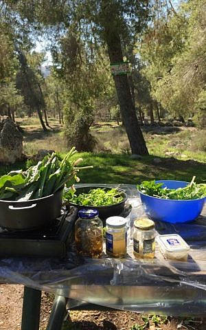 A picnic table full of freshly-foraged greens, from which Ronit Peskin will prepare three different dishes (Jessica Steinberg/Times of Israel)