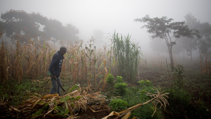 The Agahozo Shalom Youth Village in Rwanda has an advanced entrepreneurship course, but they focus on lo-tech business opportunities like farming and livestock. A farmer employed by the school harvests corn in the early morning mist on February 19, 2017. (Miriam Alster/Flash90)