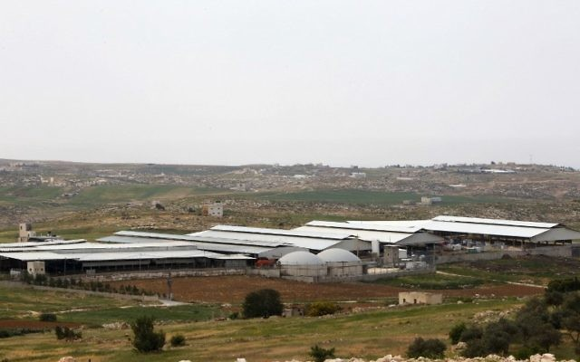 A general view of the Jebrini dairy farm in the West Bank town of Hebron, where cow dung is used to produce electricity as an alternative power source, April 10, 2017. (AFP Photo/Hazem Bader)
