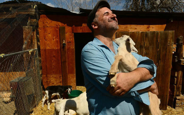 Rabbi Marc Soloway hugs a baby goat named Sheleg at the Jewish Community co-op farm near his synagogue in Boulder, Colorado on April 10, 2014. (Photo By Helen H. Richardson/ The Denver Post)