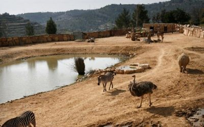 A general view of The Biblical Zoo in Jerusalem, March 11, 2008. (Michal Fattal/Flash90)