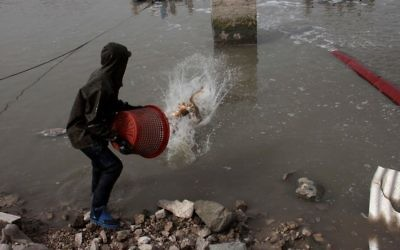 Illustrative: A man throws fish back into a fish pond at Kibbutz Maagen Michael in northern Israel on March 25th 2012. (Alana Perino/Flash90)