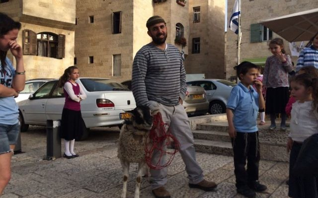 A sheep that is due to be slaughtered as part of a demonstration about the Passover sacrifice in Jerusalem's Old City on April 6, 2017. (Alexander Fulbright/Times of Israel)