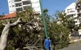 A tree that toppled in a Kfar Saba street, killing a 65-year-old woman, April 5, 2017 (YouTube screenshot)