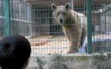 A boy looks at a bear at the Qalqilya Zoo. (YouTube screenshot)