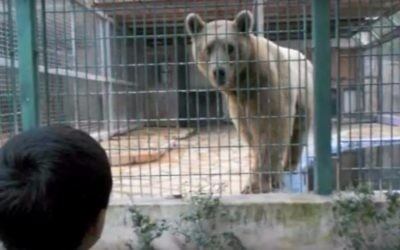 A boy looks at a bear at the Qalqilya Zoo. (YouTube screenshot)