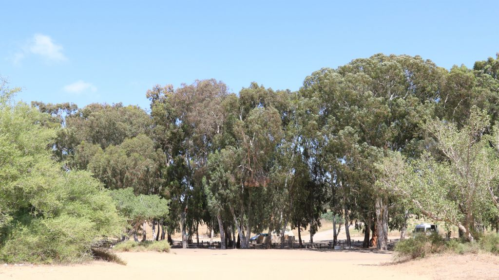 A picnic site near Kibbutz Nitzanim. The area now hosts a nature preserve. (Shmuel Bar-Am)