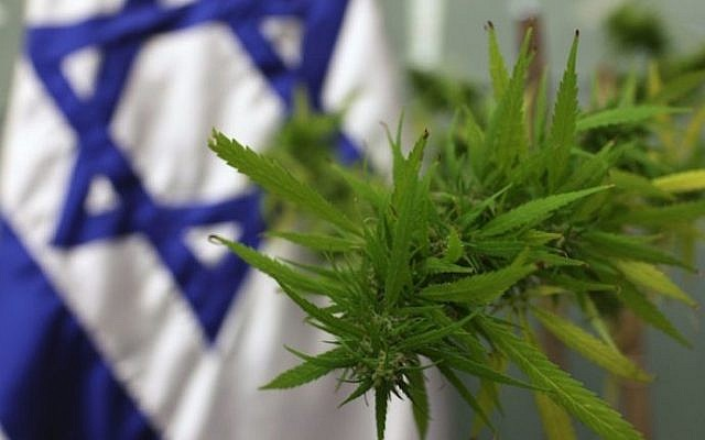 A cannabis plant at the Knesset in 2009 for a meeting on medical marijuana in the parliament's Labor, Welfare and Health Committee. (Kobi Gideon/Flash90)