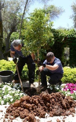Gardeners plant an almond tree in honor of Donald Trump at the president's residence, May 18, 2017. (Mark Neiman/GPO)