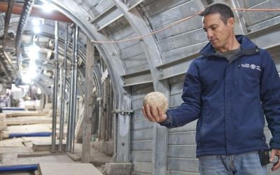 Nahshon Szanton holding a ballista stone that was apparently catapulted during the siege of the Jerusalem, while standing on an ancient street being excavated. (Shai Halevy/courtesy Israel Antiquities Authority)