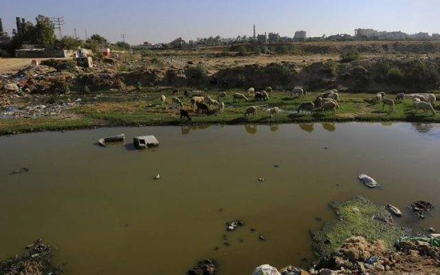 In this Sunday, June 4, 2017 photo, sheep graze near a lake of sewage close to the idled Gaza power plant in the central Gaza Strip (AP Photo/Adel Hana)