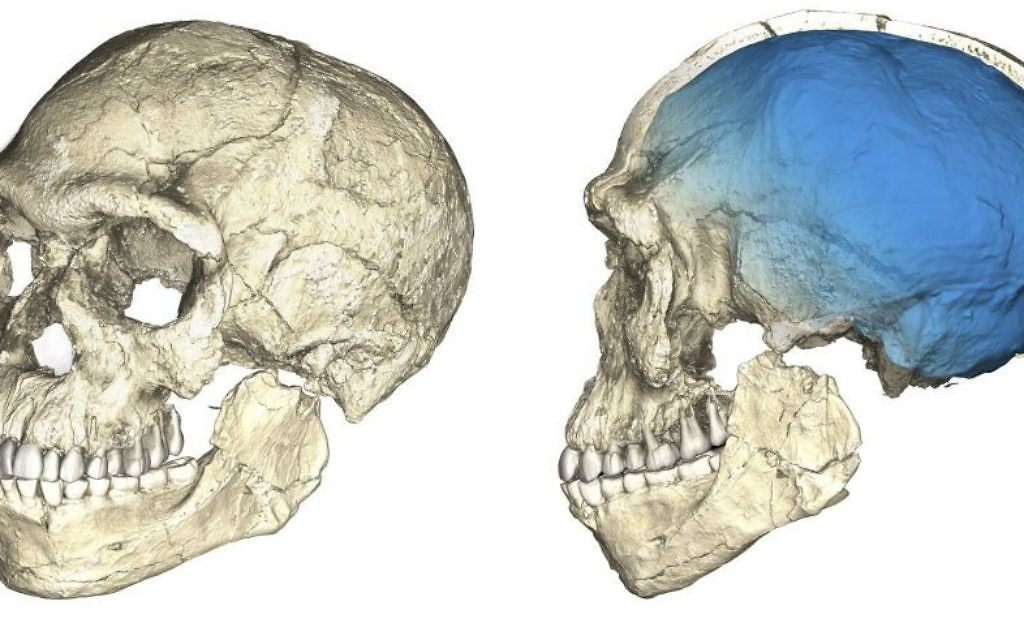 Undated artist rendering shows two views of a composite reconstruction of the earliest known Homo sapiens fossils from Jebel Irhoud (Morocco) based on micro computed tomographic scans of multiple original fossils (Philipp Gunz/Max Planck Institute for Evolutionary Anthropology via AP)