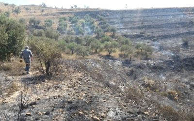 Olive trees outside the Palestinian village of Burin, which were burned by settlers from Yitzhar on June 28, 2017. (Courtesy: Yesh Din)