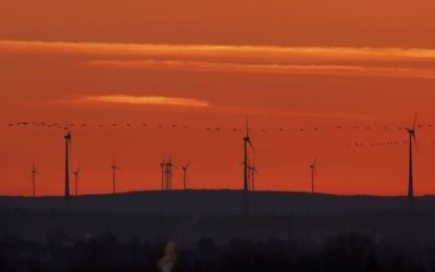 In this March 28, 2017 file photo, a swarm of birds flies past wind turbines just before sunrise on the outskirts of Frankfurt, Germany. (AP Photo/Michael Probst)