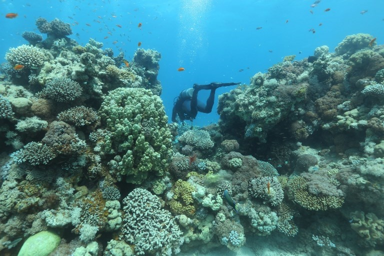 Eilat Coral Reef Defies Expectations And Regenerates After