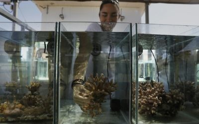 Jessica Bellsworthy, a PhD student conducting research on the coral reefs of the Gulf of Eilat, holds a coral in an aquarium at the Interuniversity Institute for Marine Sciences in Eilat, June 12, 2017. (AFP PHOTO / MENAHEM KAHANA)