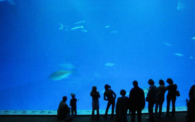 The Monterey Bay Aquarium. (CC BY, Jim G, Flickr)