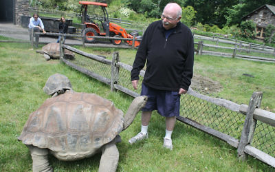Steinhardt, who takes regular 90-minute strolls around his 55-acre private zoo, enjoys interacting with his tortoises. (Ben Sales/JTA)