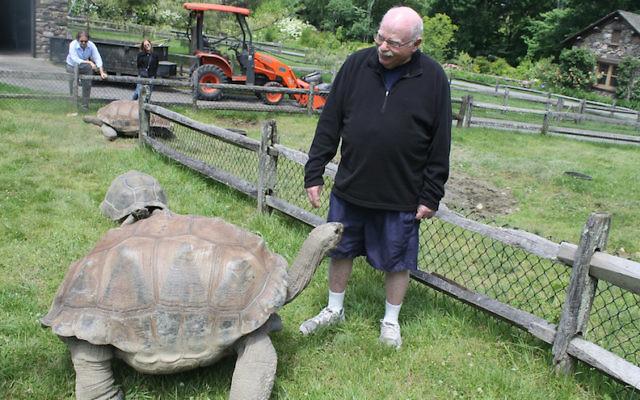 Steinhardt, who takes regular 90-minute strolls around his 55-acre private zoo, enjoys interacting with his tortoises. (Ben Sales/JTA)