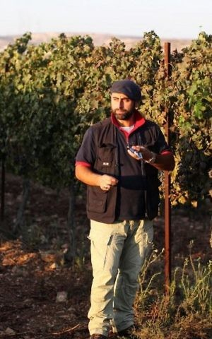 Jewish winemaker David Ventura from the West Bank settlement of Ofra checks the sugar level in grapes at his vineyard on September 18, 2011. (Kobi Gideon/Flash90)