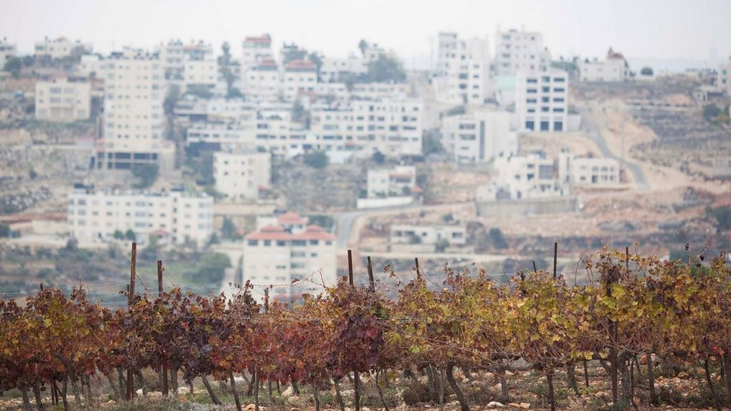 View of the fields at the Psagot vineyard in the West Bank near the city of Ramallah on December 13, 2012. (Yonatan Sindel/Flash90)
