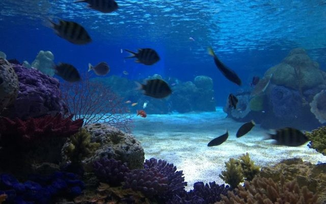 The Jerusalem aquarium, which wasn't supposed to open until sometime in July 2017, has fish placeholders in many of the tanks, as other fish are adjusting to the their new habitat in the aquarium's quarantine area (Jessica Steinberg/Times of Israel)