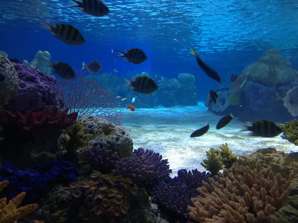 The aquarium's sea water and coral are artificial, but closely mimic the natural habitats of their resident fish (Jessica Steinberg/Times of Israel)