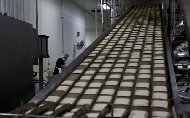 Matzah from the oven travel on a cooling belt in the matzo production line at the Manischewitz manufacturing facility on February 4, 2014, in Newark, New Jersey. ( Jeff Zelevansky/Getty Images via JTA)