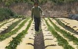 Dotan Goshen, the owner of a bio-farm in the kibbutz of Hama'apil, in central Israel, walks between rows of vegetables at his organic fruit and vegetable farm on May 8, 2017 (AFP PHOTO / JACK GUEZ)