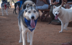 Dogs and owners congregate at Tel Aviv's Ganei Yehoshua Park for the city's annual Dog Day, August 26, 2017. (Luke Tress/Times of Israel)
