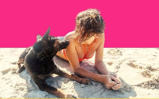 Dogs and their owners can enter a Vibe Israel contest to win an all-expenses paid vacation (Courtesy Vibe Israel)