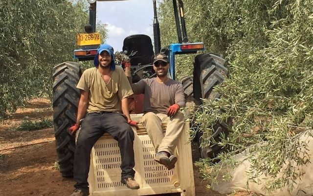 Workers sitting on tractor on Kibbutz Ruhama, Israel, October 2016. (Courtesy of Ran Ferdman)