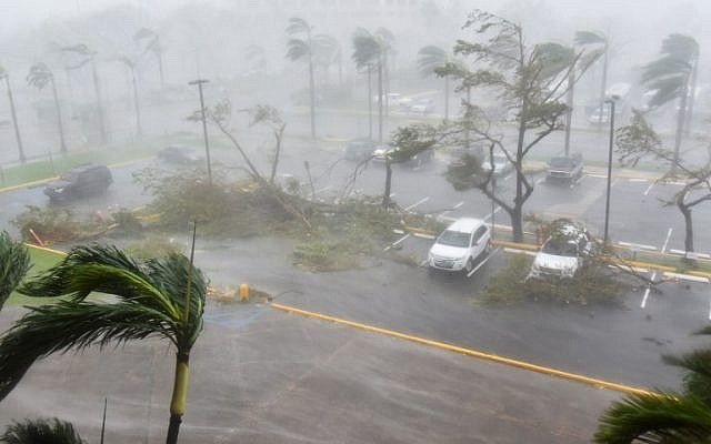 Trees are toppled in a parking lot at Roberto Clemente Coliseum in San Juan, Puerto Rico, on September 20, 2017, during the passage of the Hurricane Maria. (AFP/Hector Retamal)