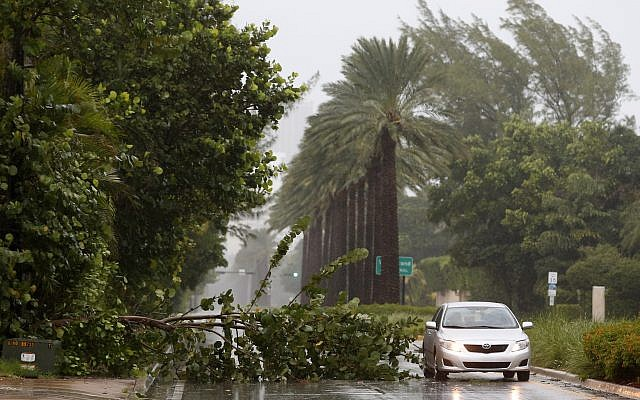 A car drives around a tree downed by winds from Hurricane Irma, September 9, 2017, in Golden Beach, Fla. (AP/Wilfredo Lee)