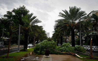 Illustrative: Trees knocked over in a thunderstorm are seen on Tel Aviv's Rothschild Boulevard on October 25, 2015. (Ben Kelmer/Flash90)