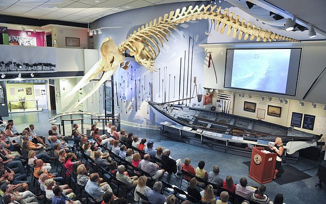 This skeleton of a 46-foot sperm whale hangs at the Whaling Museum in Nantucket, a resort island that was once a hub of the whaling industry. (Courtesy of the Nantucket Historical Association)
