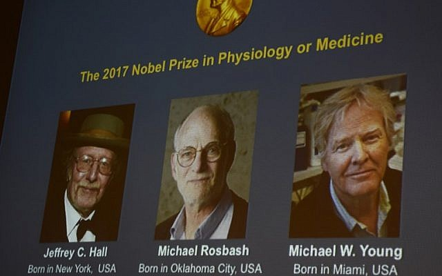Winners of the 2017 Nobel Prize in Physiology or Medicine (L-R) Jeffrey C Hall, Michael Rosbash and Michael W Young are pictured on a display during a press conference at the Karolinska Institute in Stockholm on October 2, 2017. (AFP PHOTO/Jonathan NACKSTRAND)