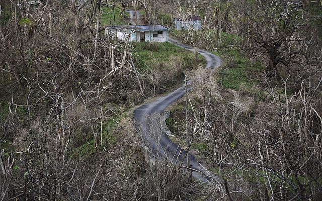 Trees stand barren in the aftermath of Hurricane Maria along a road in Montones Cuatro in the Piedrazul sector of Las Piedras, Puerto Rico, Monday, October 2, 2017. (AP Photo/Carlos Giusti)